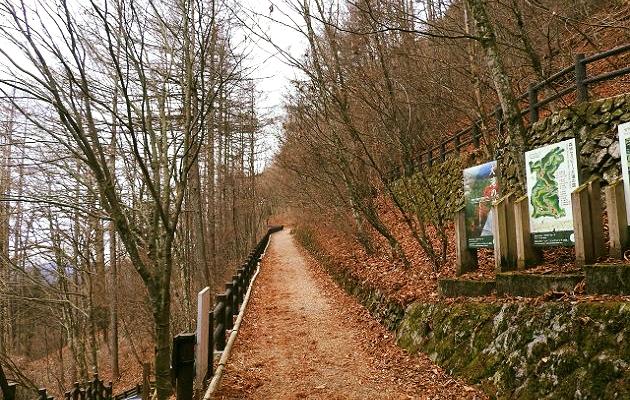現在の登山道状況です。セラピーロード入口