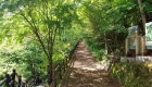 春:森林セラピーロード