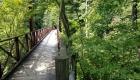 夏:滝見橋