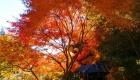秋:あずまや