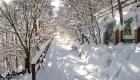 冬:森林セラピーロード